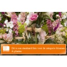 Gratis extra's bij Studio M Flowers