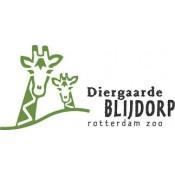 Blijdorp (vanaf 12 jaar )